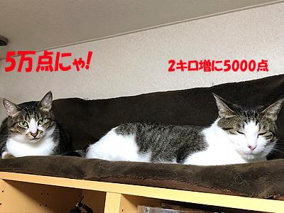 1-11-27-qのコピー.jpg