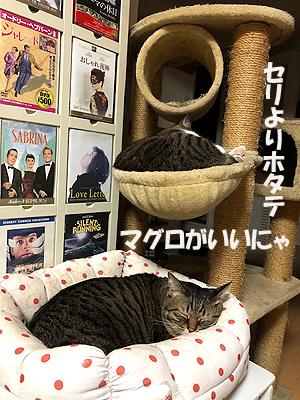 1-12-24-cのコピー.jpg
