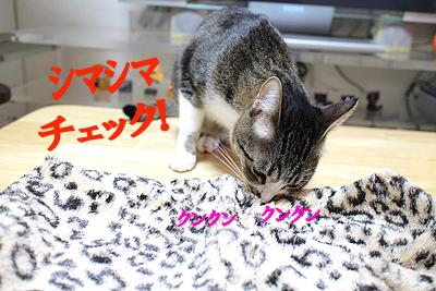 26-10-20-eのコピーのコピー.jpg
