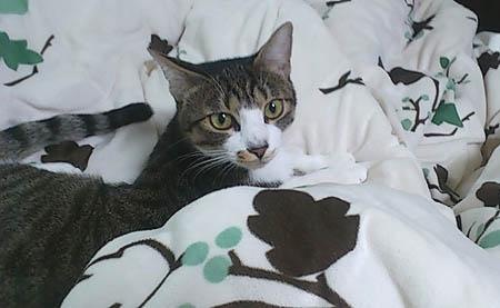 溺愛猫的女人館   SSブログ