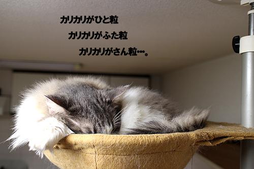 28-1-8-cのコピー.jpg