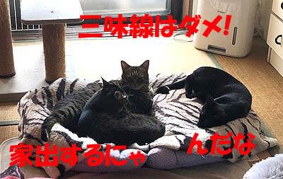 3-5-13-cのコピー.jpg