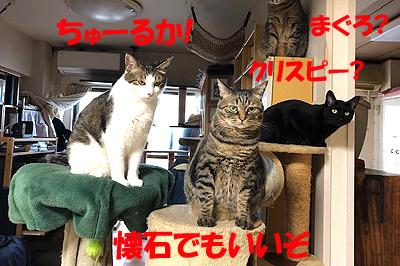 3-5-9-aのコピー.jpg