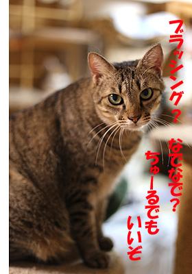 3-8-16-aのコピー.jpg