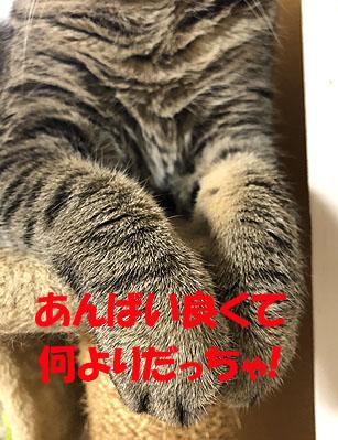 3-8-25-eのコピー.jpg