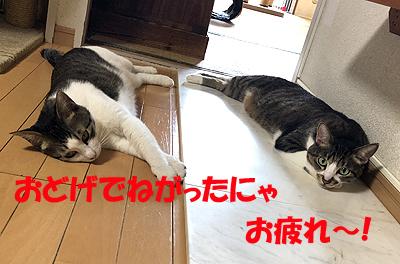 3-8-4-aのコピー.jpg