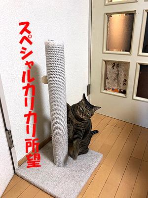 30-11-4-nのコピー.jpg